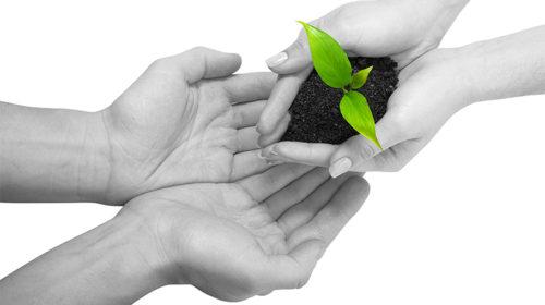 Wealth Management | Calla Financial